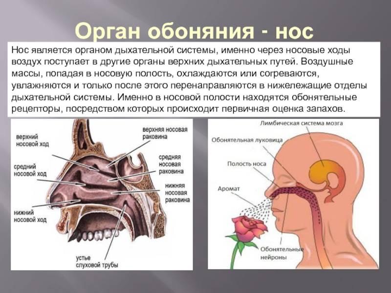 Как дышат морские. строение респираторной системы черепах, обоняние и осязание. есть ли у рыбы сердце