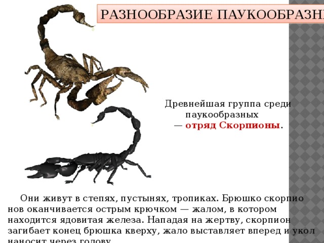 Где обитают скорпионы?