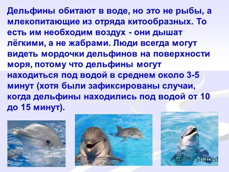 Дельфины: виды, фото, описание, образ жизни, общение