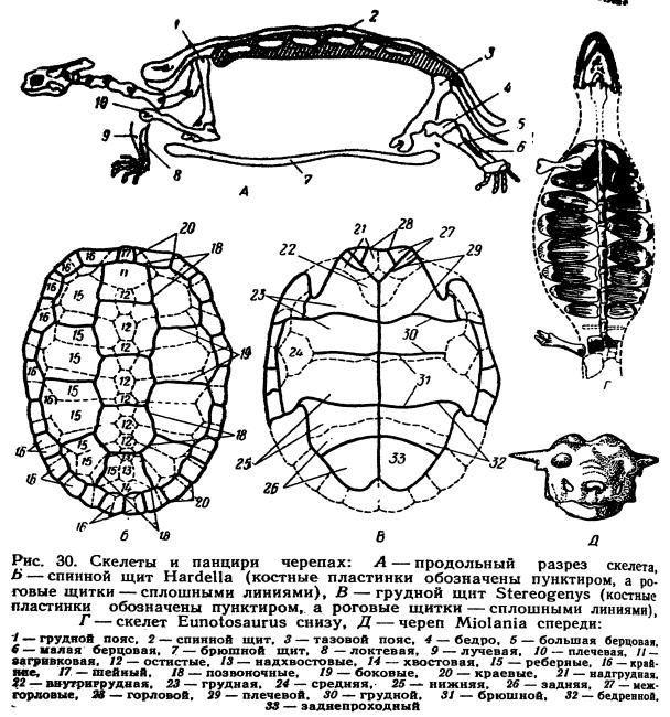 Где живут черепахи? общее описание, строение тела, разновидности