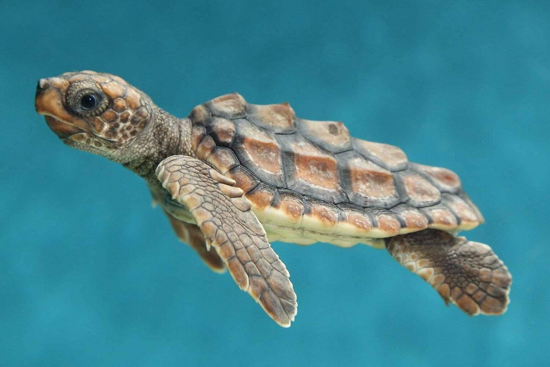Раздвоенный язык илистой черепахи - предмет - world of warcraft