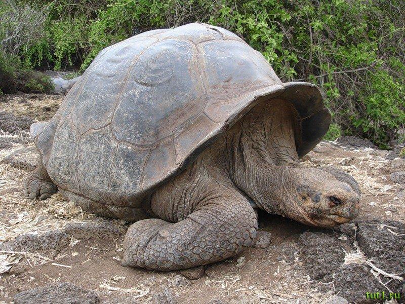 Топ 10 самых больших черепах в мире