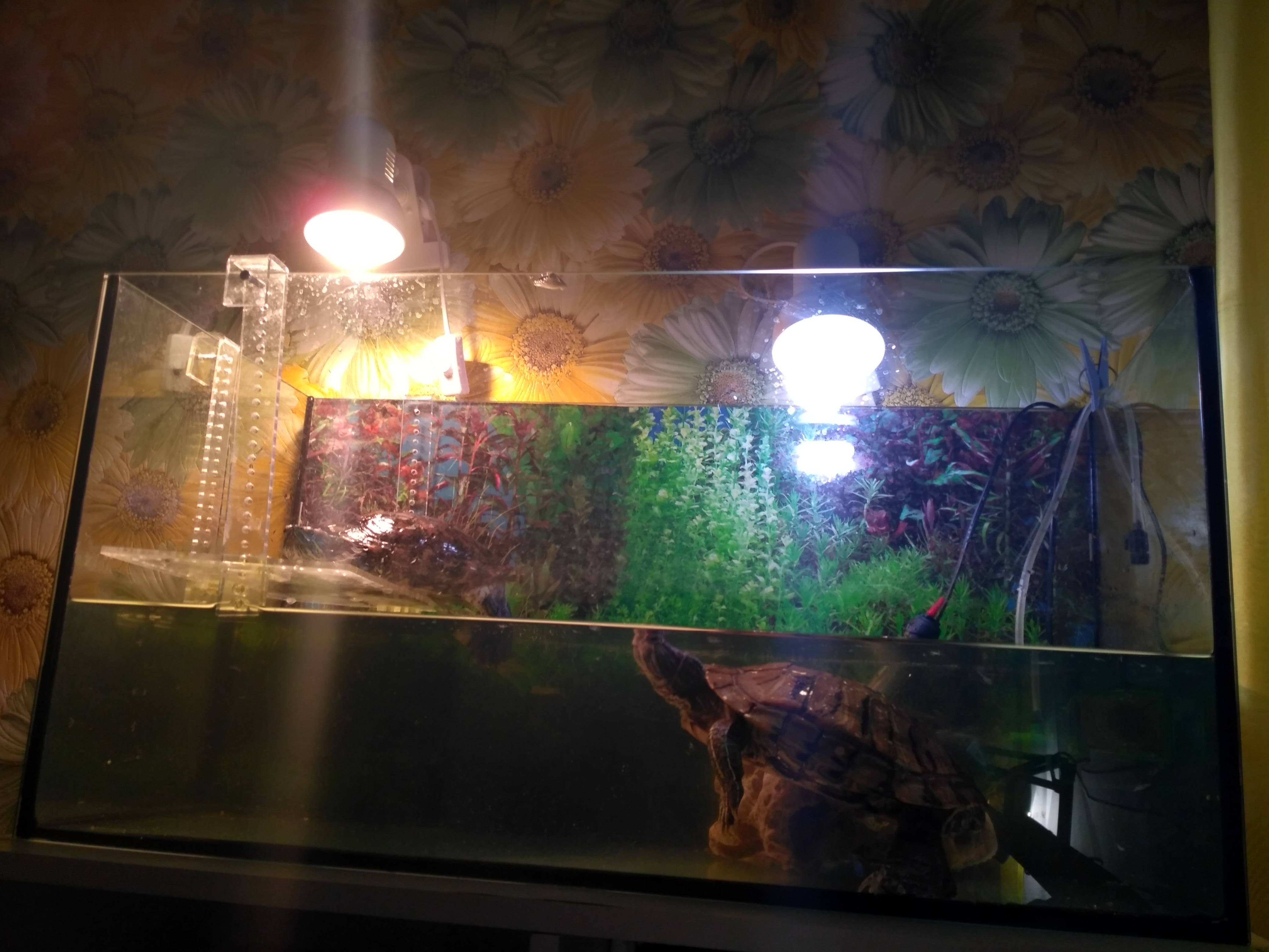 Какая лампа подойдет для красноухой черепахи