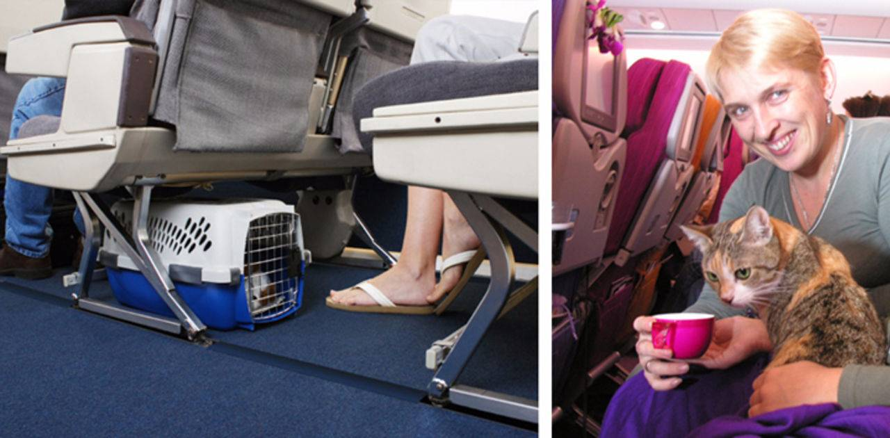 Как взять животное в самолет: шесть жизненно важных правил перелетов для собак и кошек