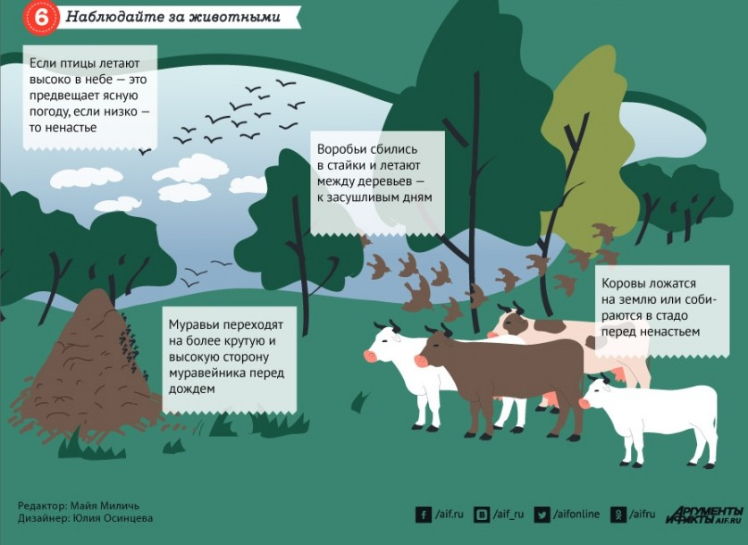 Животные – синоптики. Прогноз погоды от домашних питомцев