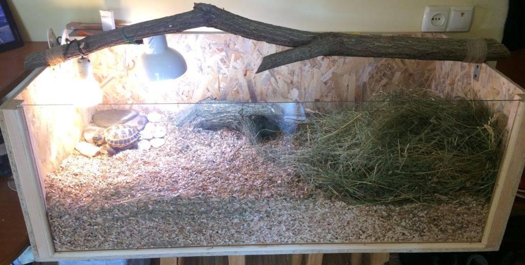 Как выбрать и обустроить террариум для сухопутной черепахи