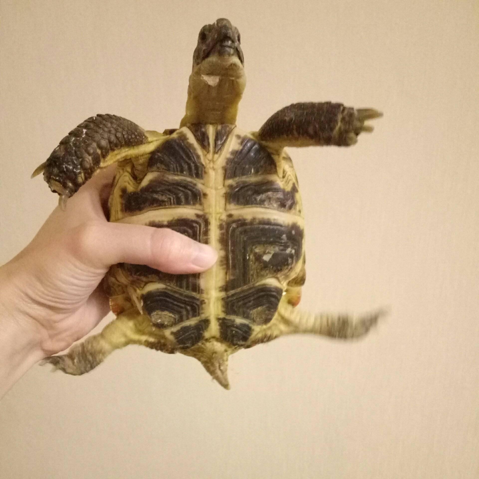 Как делать уколы черепахам
