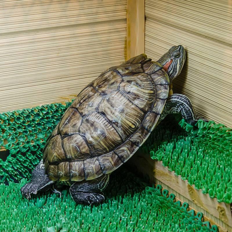 Как назвать черепаху