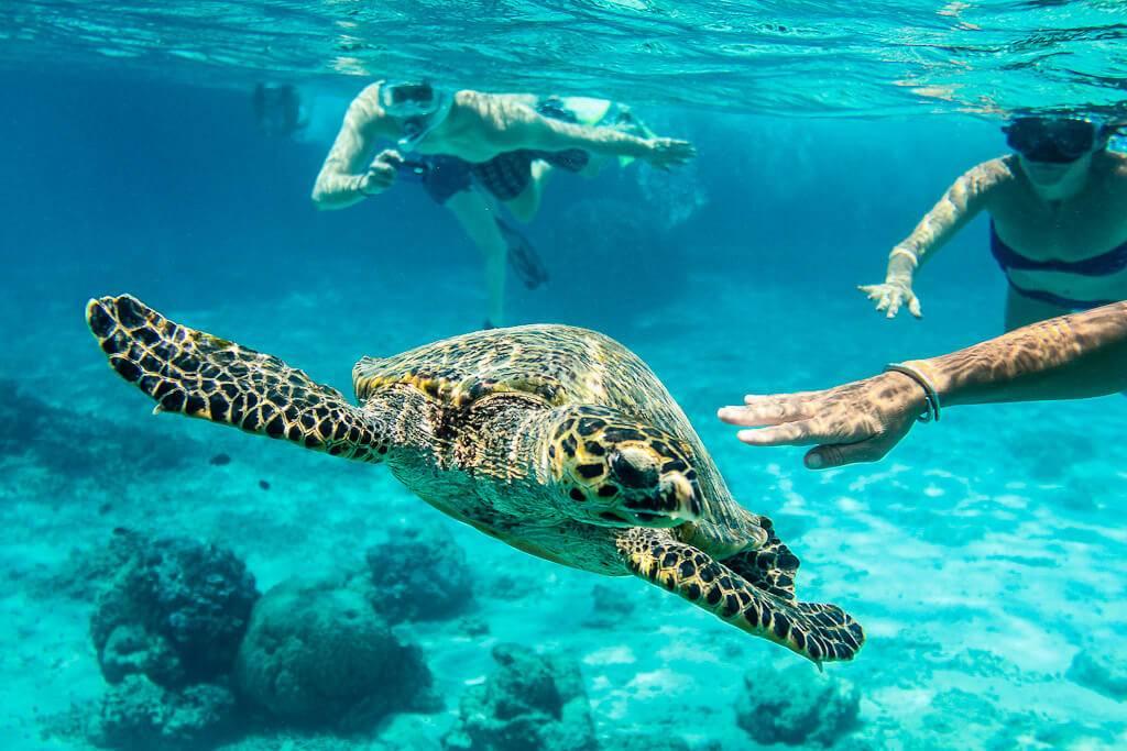 Черепахи начали питаться пластиком. что с этим делать?