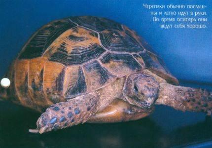 Черепахи (29 стр.)