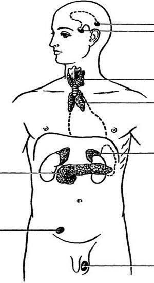 Железы внутренней секреции (анатомия)