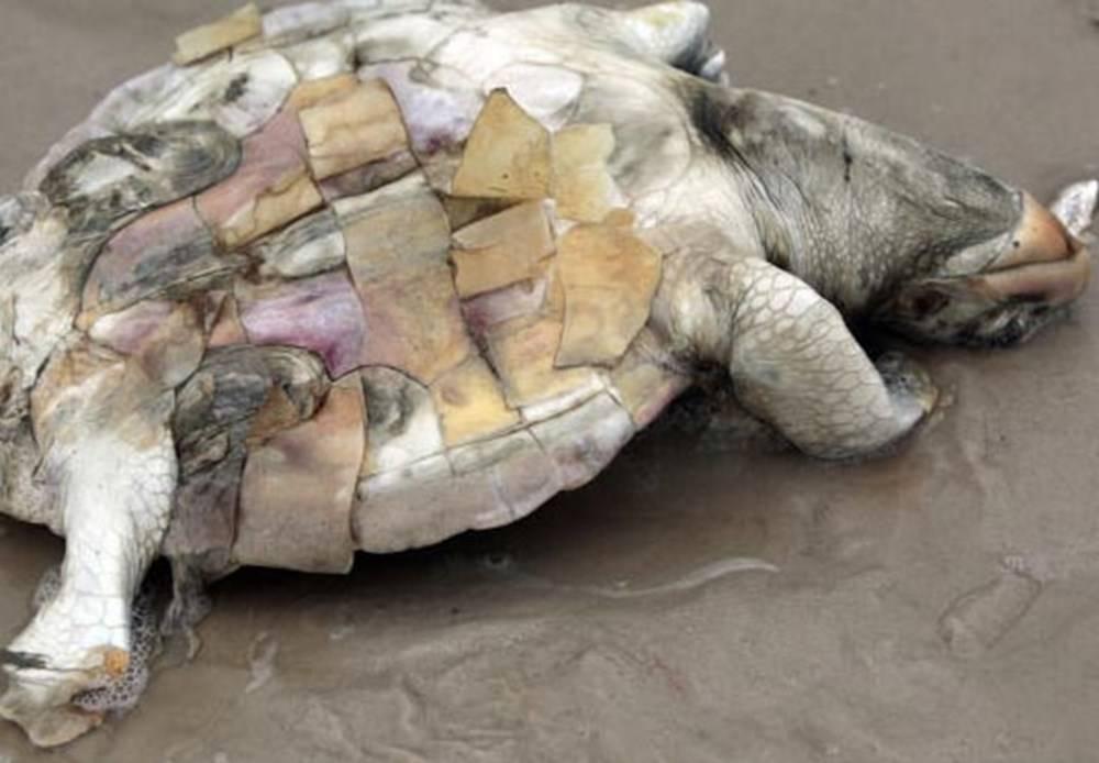 Что делать когда красноухая черепаха не ест. черепаха ничего не ест. причины и последствия