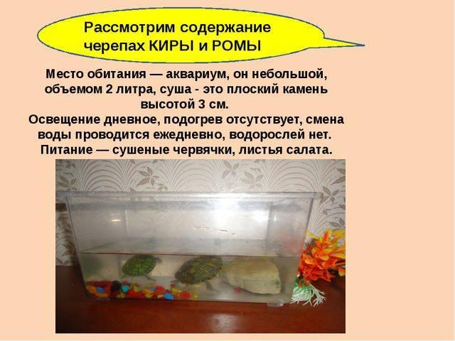 Чем кормить маленьких красноухих черепах?