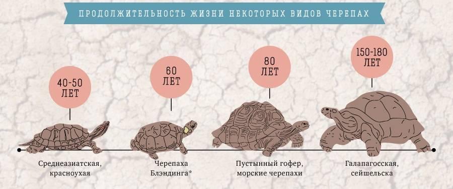 Стратегия торговли черепаха для бинарных опционов