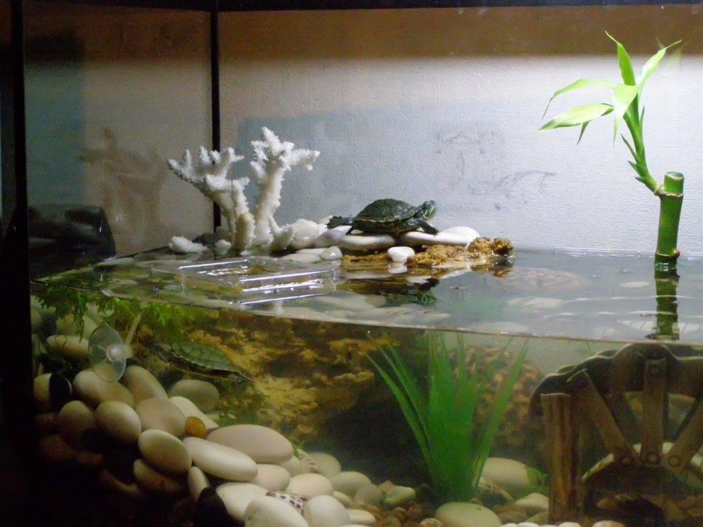 Черепаха в аквариуме с рыбками
