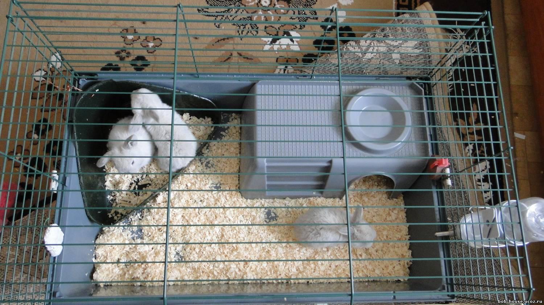 Как сделать клетку для декоративного кролика своими руками