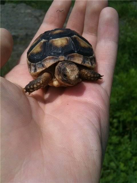 Кличка для черепахи мальчика | что говорят насекомые