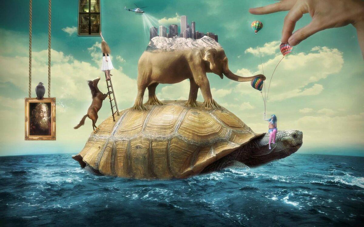 Мифы, ошибки и заблуждения о черепахах. черепаха: краткая информация черепахи имеют длинные ноги