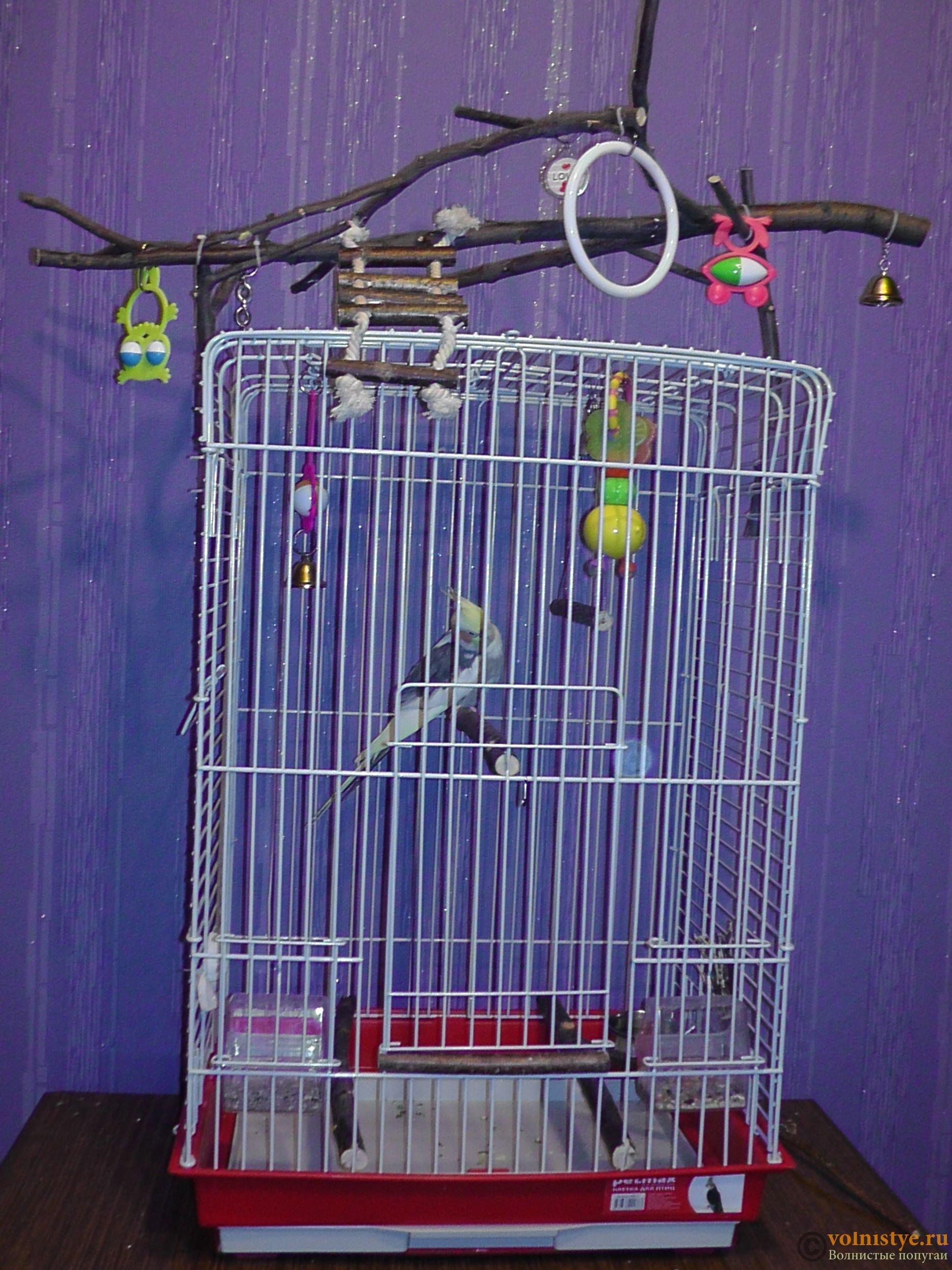 Как выбрать клетку для волнистого попугая или сделать своими руками