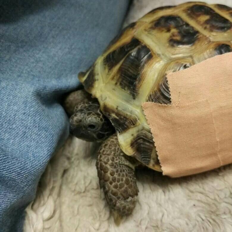 Какие бывают разновидности сухопутных черепах