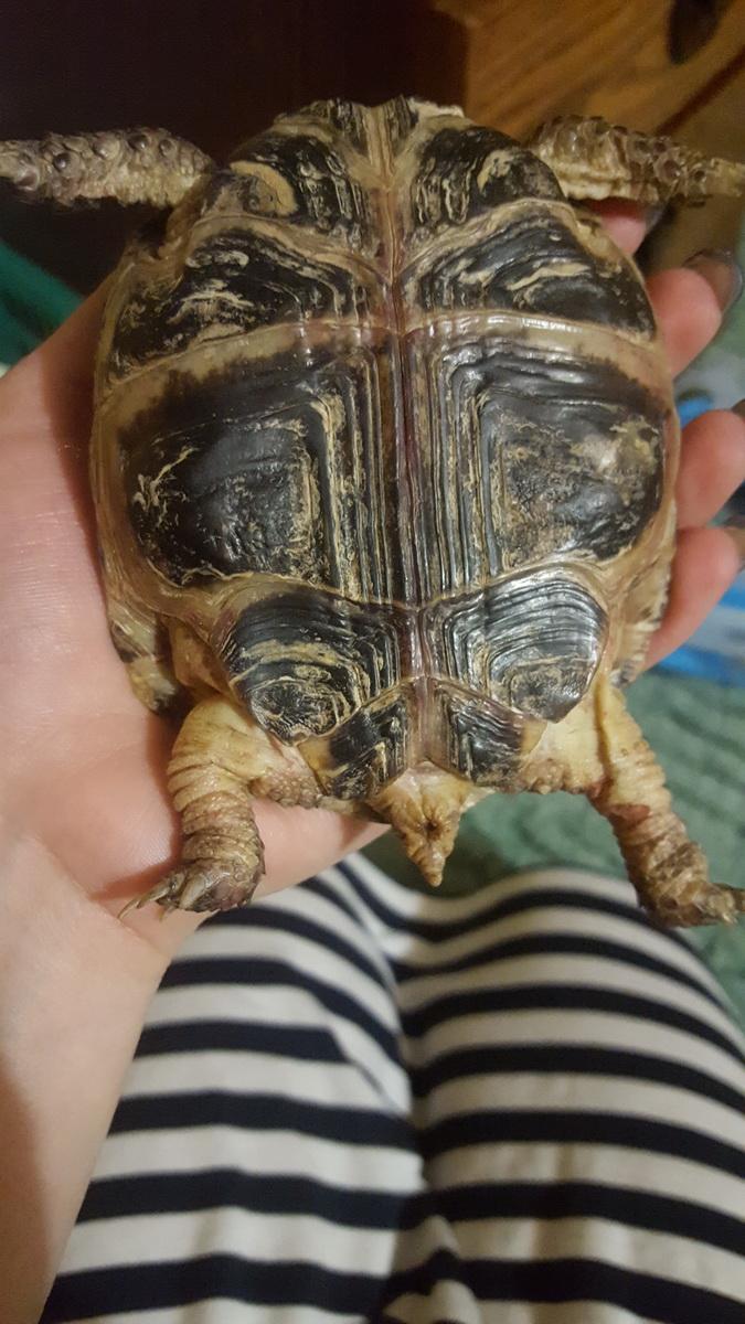 Как приручить черепаху