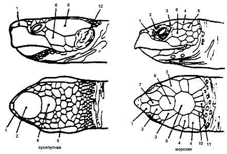 Все о строении тела черепах. строение и анатомия черепах