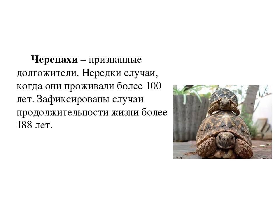 Как приручить черепаху?