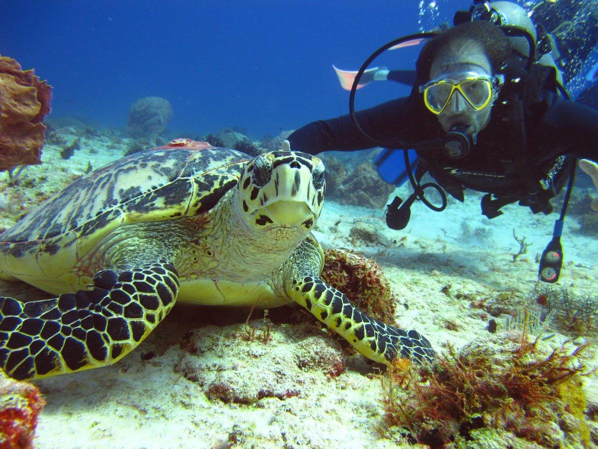 Фонтан черепах, рим. отели рядом, фото, видео, как добраться – туристер.ру