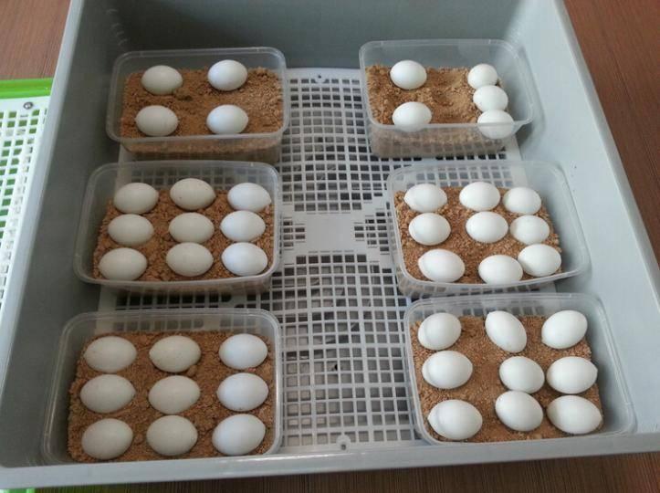 Черепашье яйцо — официальная minecraft wiki