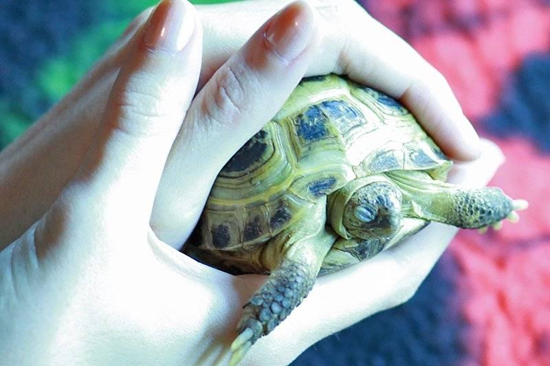 Софрадекс для черепах
