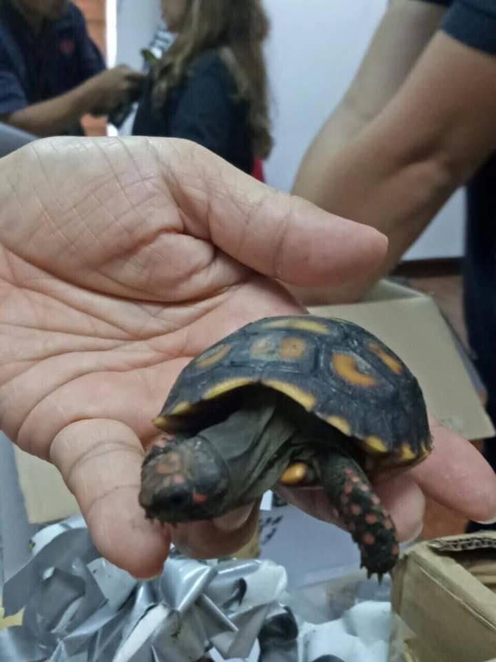 Недалеко ушли: контрабандисты провезли в кузове грузовика 4 тыс. черепах | статьи | известия