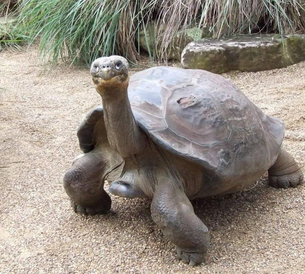 Топ 10 самых крупных черепах в мире
