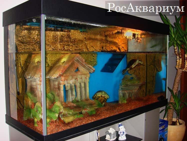 Аквариум для красноухих черепах: обустройство жилища рептилии