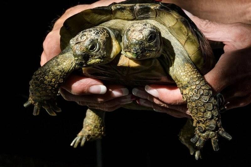 Имя для красноухой черепахи мальчика. подчеркнуть индивидуальность и выбрать подходящее имя своей черепахе. выбираем имя девочке