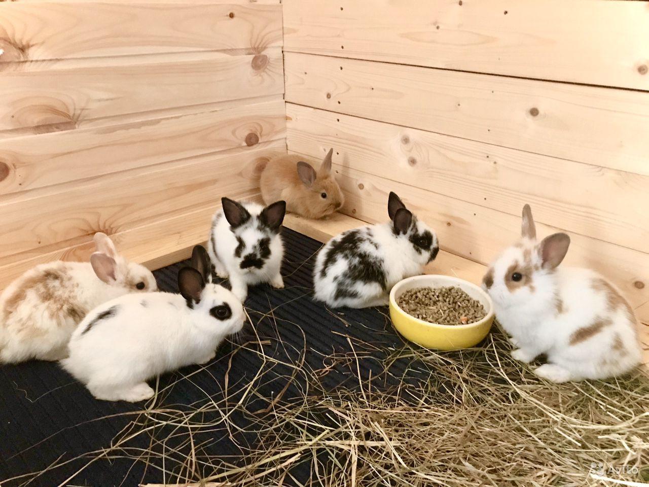 Размножение декоративных кроликов