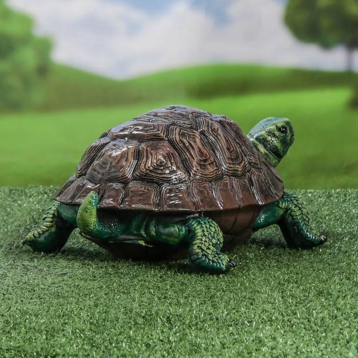 Testudo hermanni (балканская черепаха) - черепахи.ру - все о черепахах и для черепах