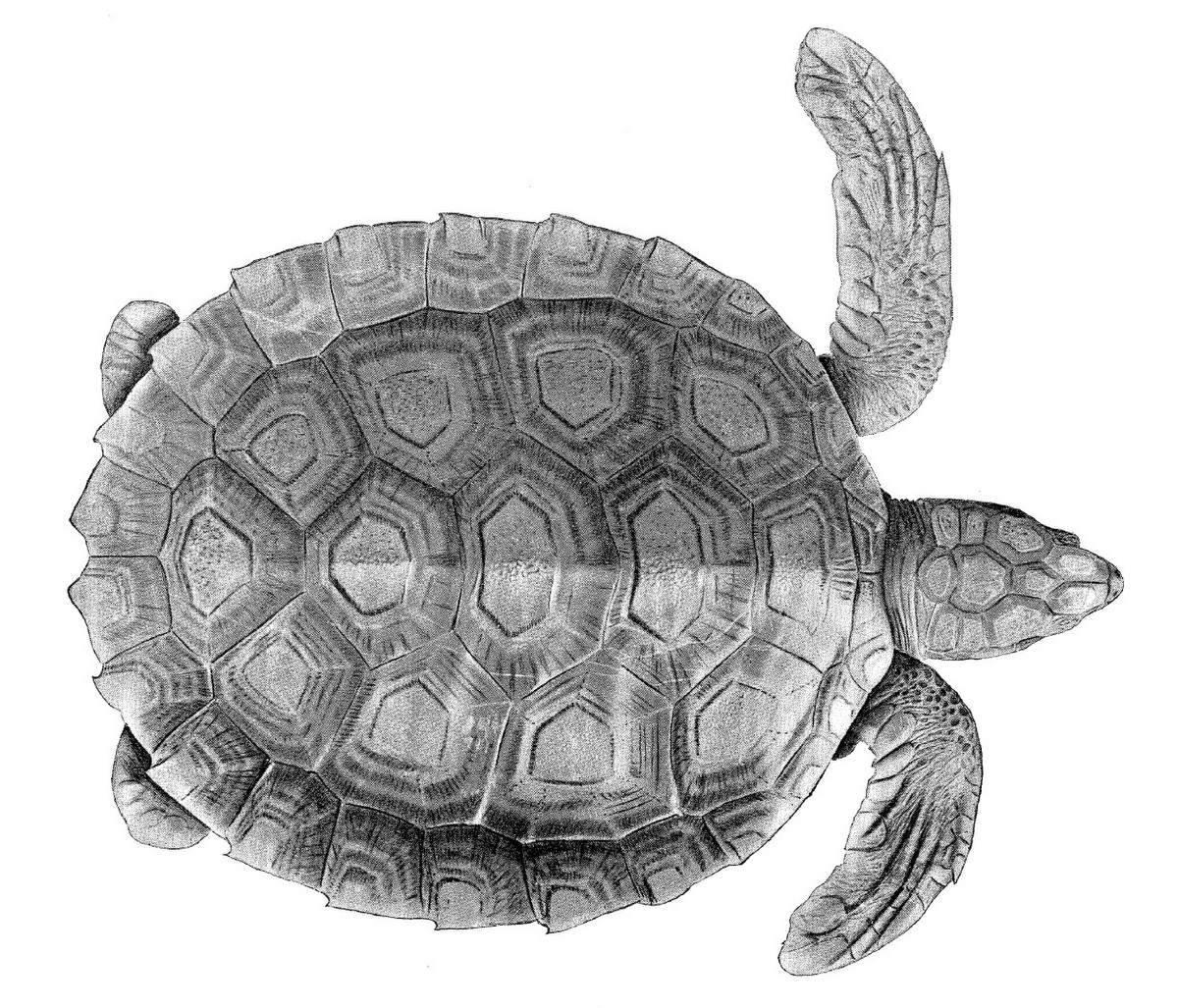 Протерозухии — википедия переиздание // wiki 2