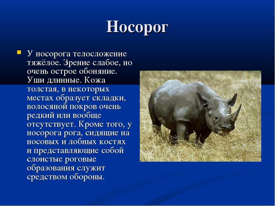 Яванский носорог