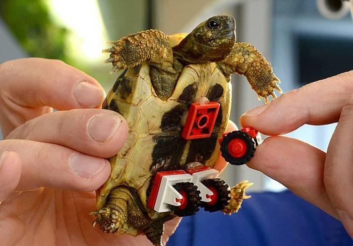 Черепахи «плачут» вруках спасателей