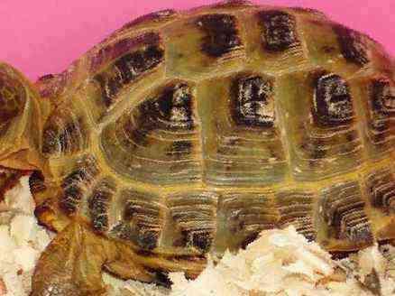 Распространенные болезни черепах
