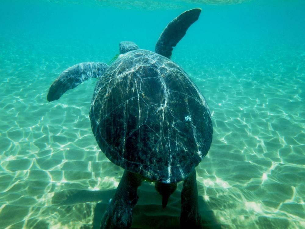 На кипре обнаружили очередную мертвую черепаху