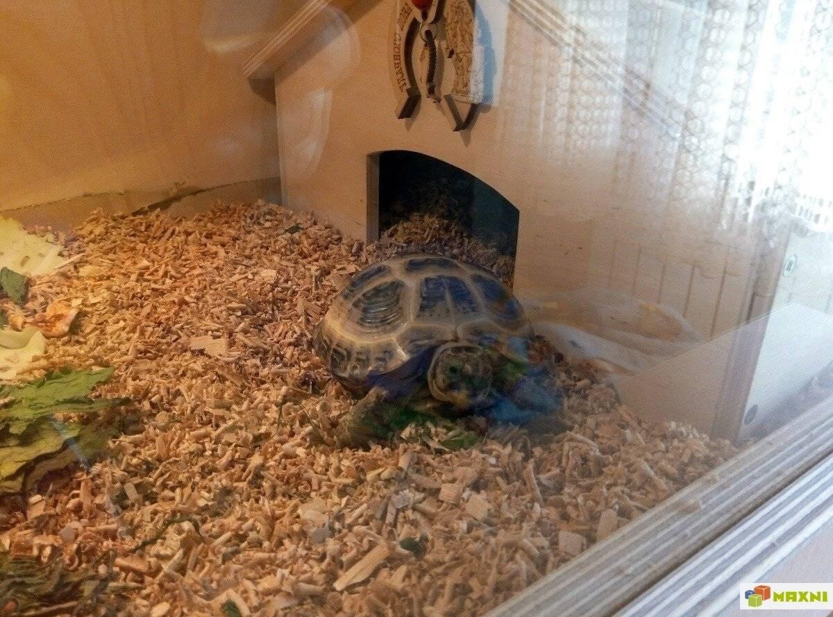 В чём держать сухопутную черепаху? - можно ли черепаху держать под батареей - запись пользователя наталья (id1305009) в сообществе домашние животные в категории улитки, черепахи, рептилии - babyblog.ru