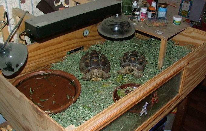 Сухопутная домашняя черепаха — как ухаживать?
