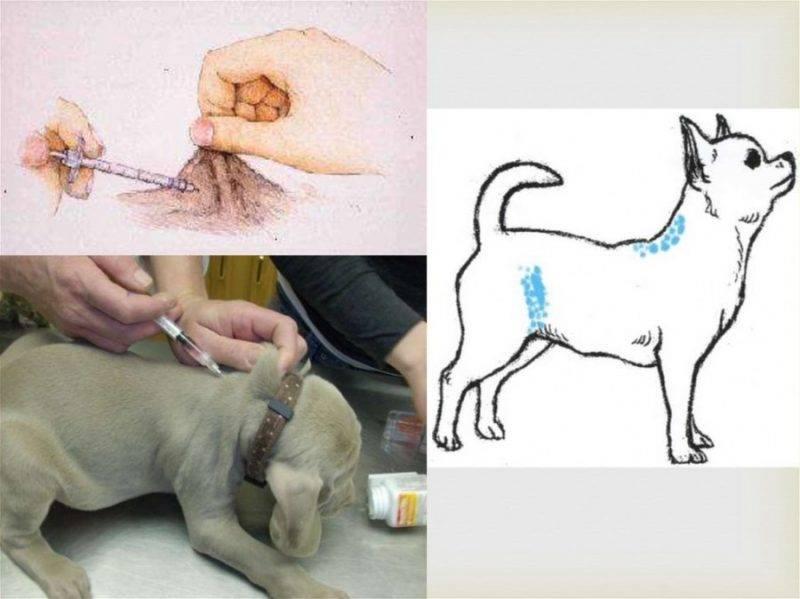 Подкожная инъекция в плечо, живот, бедро. техника выполнения, введения