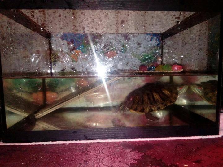 Как правильно ухаживать черепаху в аквариуме | что говорят насекомые