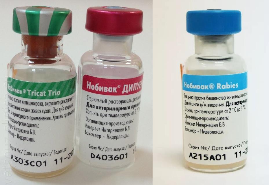 Какие прививки делают хорькам