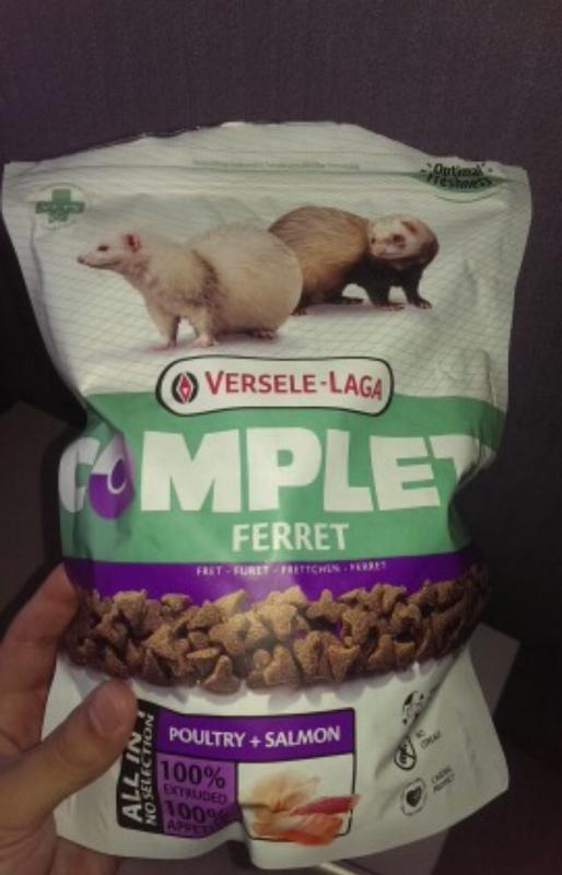 Чем кормить домашнего хорька? Натуральные корма