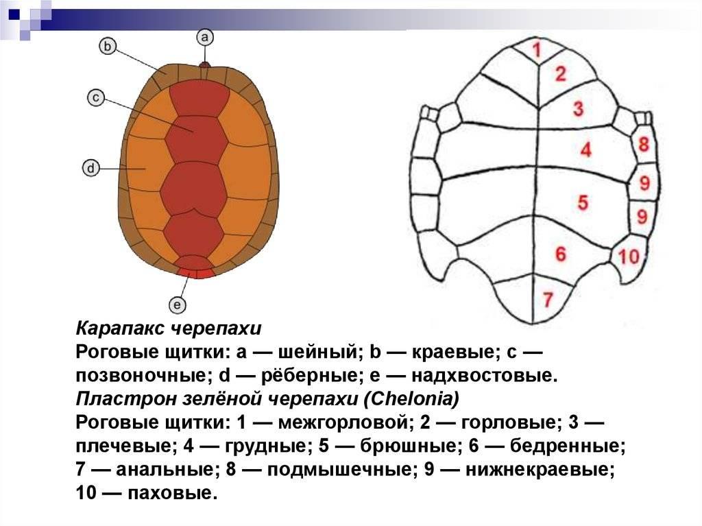 Железы внешней, внутренней и смешанной секреции. эндокринная система