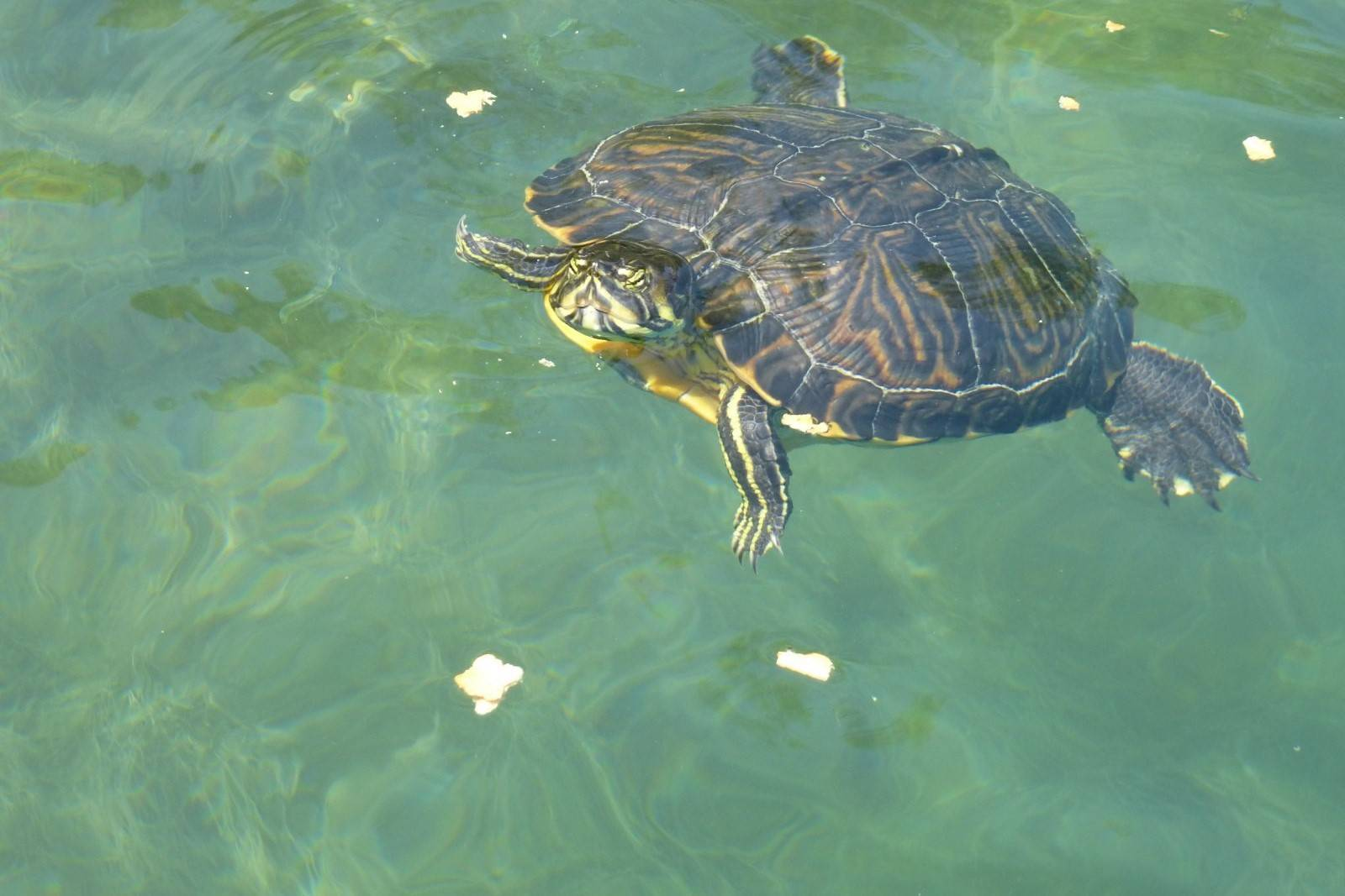 Греческий остров корфу: исчезающие черепахи, деревья и рыбаки