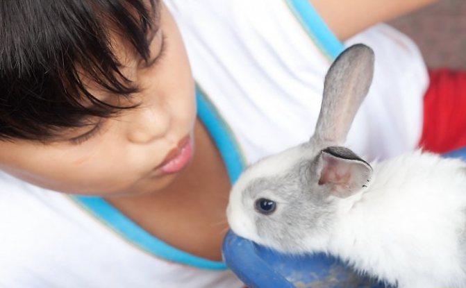 Советы как дрессировать декоративного кролика